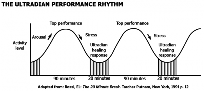 Graph representing Ultradian rhythms